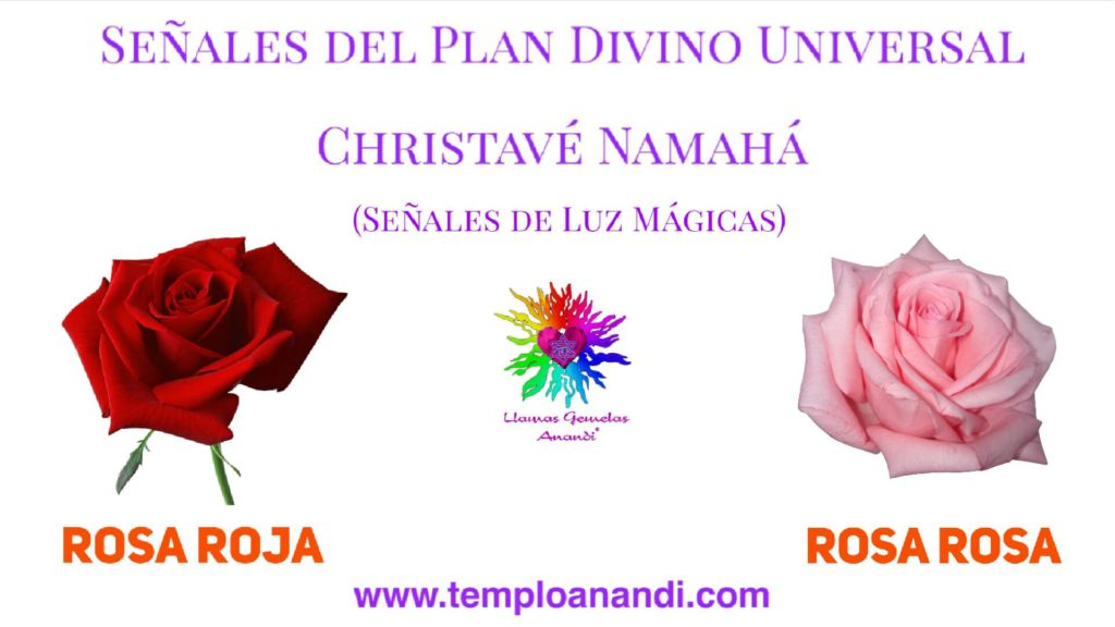 señal de luz mágica rosa roja y rosa rosa