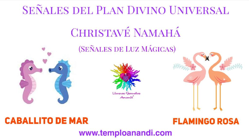 señal de luz mágica caballito de mar y flamingo rosa